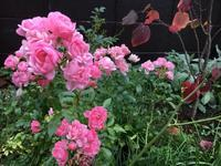できるだけの広さの庭でいい - IL PARADISO VERDE DI NORINA ~美瑛印象派ガーデン便り~