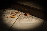 筥崎宮の秋・・・ - ショーオヤジのひとり言