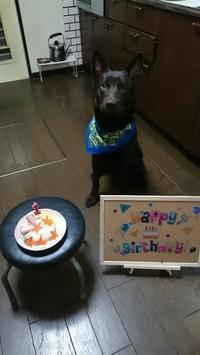 誕生日 - Paws  Family~犬と歩く365日~
