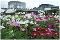 三陽メディアフラワーミュージアム(旧 花の美術館) - とまれみよ