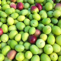 今日はオリーブの収穫第1弾!〜オリーブ農園日記 vol.29〜 - 幸せなシチリアの食卓、時々にゃんこ