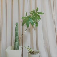 長い付き合い - Bd-home style