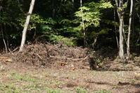 お片づけマインドで森ガール 〜焚き木集め〜 - YUKKESCRAP