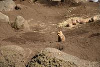 2017年 江戸川区自然動物園 - 星降る週末