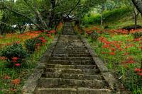 仏隆寺・石段の彼岸花 - 花景色-K.W.C. PhotoBlog