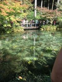 モネの池&郡上八幡 - 日本酒biyori
