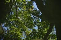 「紅葉の序章-永観堂禅林寺-」 - ほぼ京都人の密やかな眺め Excite Blog版