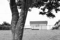 インスタ映えには無縁だが妙にエロティックな樹幹 - 照片画廊