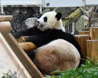 2017年9月 白浜パンダ見隊 その10 ママと過ごす結ちゃん4 - ハープの徒然草