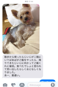 iMessageのハチくん通信 - ヨーキー はちのお留守番とママの香港生活