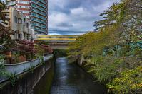 記憶の残像 2017年花の東京 -48東京都中野区 中野坂上付近 - ある日ある時 拡大版
