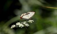 秋本番 - 紀州里山の蝶たち