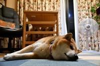 眠り姫 - 写心食堂