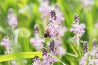 鬼怒川河川敷に咲く美しい花 - TOM'S Photo