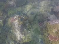 テンゴル島でのシュノーケリング−1 - melancong