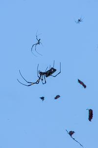 クモの一家 - 彩りの軌跡