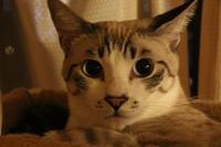 きれいに撮りたい!思いだけは。。。 - ぎんネコ☆はうす