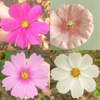 秋の桜 - アーティスティックな陶器デザイナーになろう