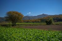 野辺山・清里周辺も紅葉が進んできました - オーナーズブログ・八ケ岳南麓は晴れています!