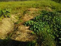 二順目の畝の整備(南国畑) - 化学物質過敏症・風のたより2
