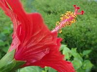 9月10日  ばらの花を求めて - おぃちゃんのデジ散歩