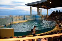2017,9,9 新江ノ島水族館 イルカショー その1 - 死すべきキモオタ~或いは怠惰な脂肪の塊~