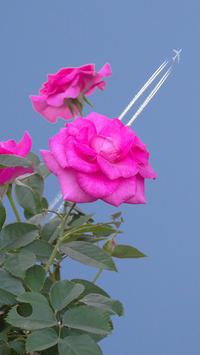 薔薇の写真飛行機の写真とコラボ写真撮影場所(資生堂) - 写真と画像 Illustrator&Photoshopで楽しんでます! ネイル画像!