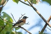 早い到来 - 趣味の野鳥撮影