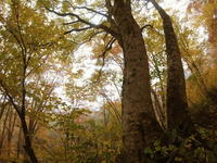 夏山登山の締めは紅葉の妙高山へ - ura-sasa 妙高裏ササ日記