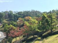 秋 - 日々の事  yua