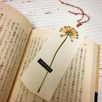 読書の秋 - FRASCO DIARY