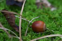 森の秋 - デジタルで見ていた風景