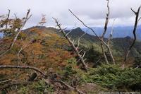 奥駈道 紅葉 (4) 弥山から八経ヶ岳へ - ratoの大和路