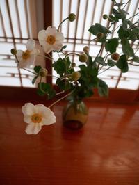 今週の華の花 - ご機嫌元氣 猫の森公式ブログ