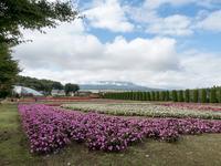 山中湖花の都公園の秋~渓流の里 - 柳に雪折れなし!Ⅱ