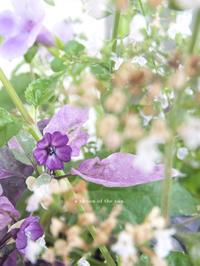 Purple Flower -  小さじいっぱいのたいよう