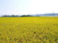七城米長尾農園平成29年度の新米を先行予約受付中!!美しすぎる田んぼの稲刈り2017(前編) - FLCパートナーズストア