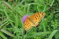 秋の日 - 蝶の縁