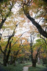 秋の奥駈け道山上ヶ岳~大普賢岳 - 峰さんの山あるき
