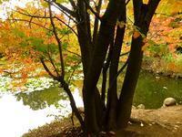 10月 ・ 道庁前庭の秋 (二) - 野に咲く北国の花