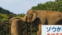 動物園のイイ顔 - ウンノ整体と静岡の夜