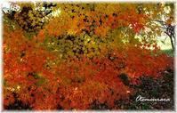 京都の秋は美しかった & English Lesson 10.13 - 日々楽しく ♪mon bonheur