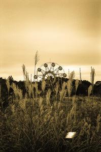 金色のススキの歓声で沸く晩秋の廃遊園地 - Film&Gasoline