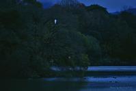 鷺一羽 @ 水上池 - 東大寺が大好き