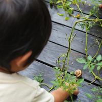 カタツムリハンター「Q」参上 - 能古島の歩き方