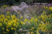 秋の風 - 今が一番