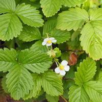 オフシーズンのお店 - sola og planta ハーブとお花のお庭日記
