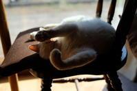 寝猫22 - オムイと森羅万象