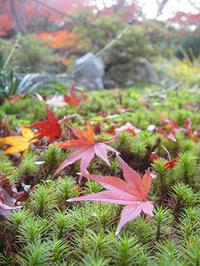 京都の嵐山、紅葉の季節が近づいています。 - 写真と画像 Illustrator&Photoshopで楽しんでます! ネイル画像!