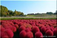 コキアも紅くなる秋 - 北海道photo一撮り旅